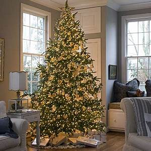 Christmas Trees…the good bad and the ugly