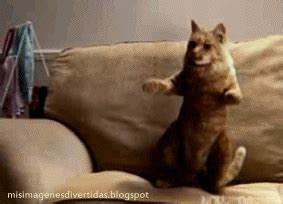 Dance Dancing Cat GIF - Find & Share on GIPHY