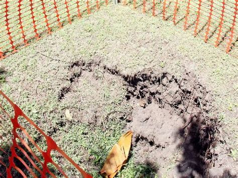 Small Sinkhole In Backyard - small sinkhole opens up in bribie backyard