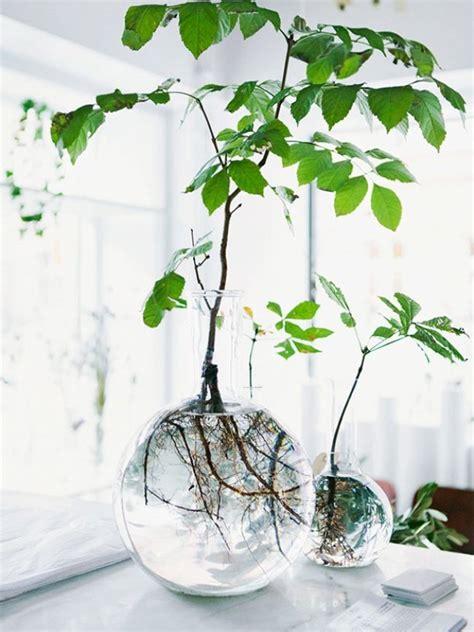 bye bye maison cuisine plantes dans un vase avec de l eau ma plante mon bonheur