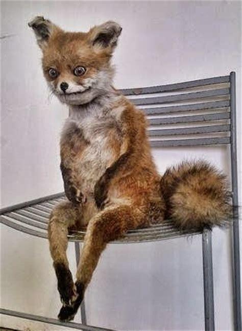 Taxidermy Fox Meme - taxidermy fox meme 28 images упоротая лиса упоротая лиса лис наркоман чучело лисы taxidermy