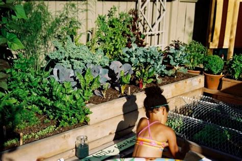 easy herb  vegetable garden designs hgtv