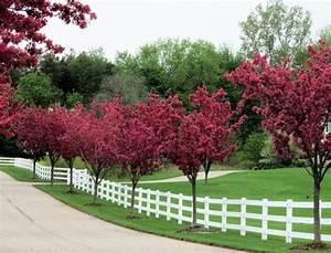 Rosa Blühende Bäume April : rosa bl hende b ume und wei er zaun b ume pinterest zaun garten und gartenzaun ~ Michelbontemps.com Haus und Dekorationen