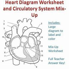 Heart, Circulatory System And Life On Pinterest