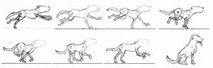 Dog Run Cycle by Wolfmoss on DeviantArt
