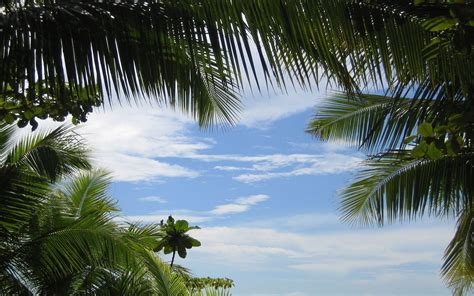Tropical Backgrounds by Tropical Backgrounds Pictures Wallpaper Cave