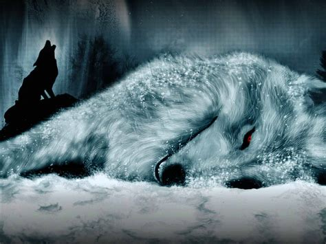 3d Wallpapers Wolf by High Quality Wallpapers 3d Wolf Photos