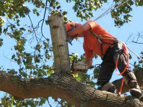 business local listings tree removal services should only be done by professionals