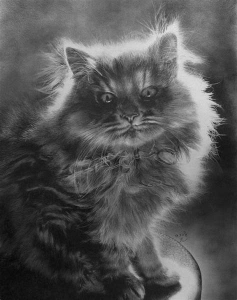 incredibly realistic pencil drawings  paul lung bored