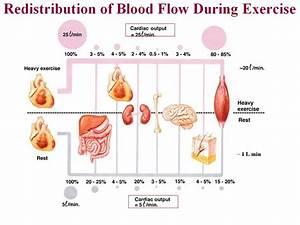 Mejorando Nuestra Circulaci U00f3n Sangu U00ednea    Improving Blood