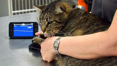 alivecor lets  check  pets heart rate