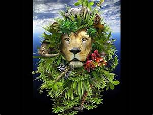 Jungle Animals Eightteen wallpapers | Jungle Animals ...