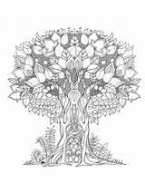 Coloring Oak Zentangle Adults Printable Mycoloring sketch template