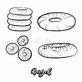Bagel Drawing Sketch Illustration Vector Food Dreamstime Yeast Drawn Hand Illustrations Vectors sketch template