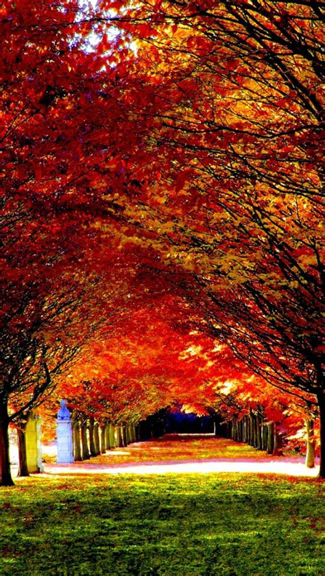 Fall Road Iphone Wallpaper by Woods Road 03 Wallpaper Free Iphone Wallpapers