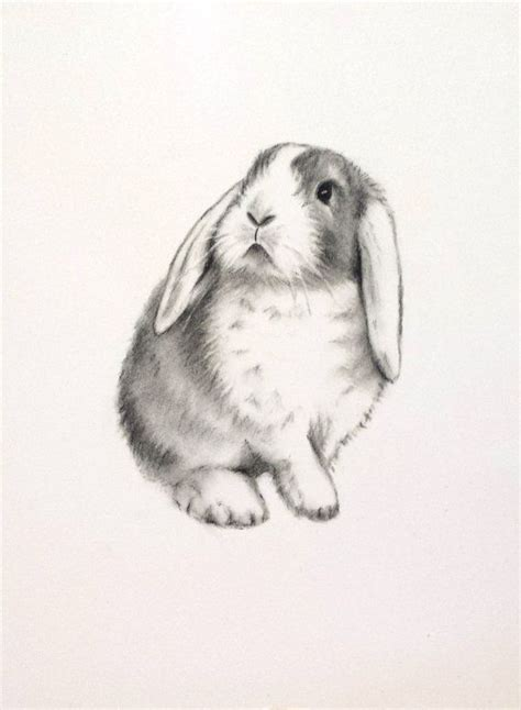 Rabbit Drawing 850 Best Easter Bunny Eggs And Ducklings Images On