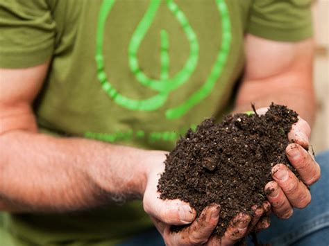 eco friendly gardening create an eco friendly landscape at home
