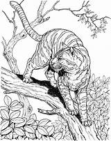 Tiger Coloring Pages Animals Tree Wildlife Printable Jungle Super sketch template