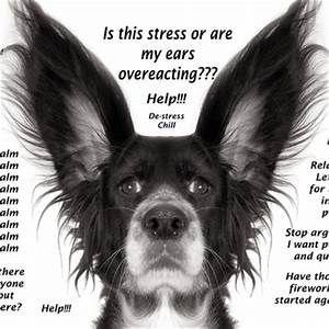 Is your Dog stressed out, anxious and worried??? Reach for ...