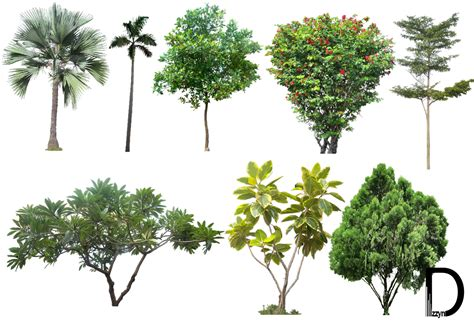 20 Tree Png Images (free Cutouts) For Architecture