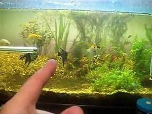 Co2 Aquarium Berechnen : co2 in the planted aquarium youtube ~ Themetempest.com Abrechnung
