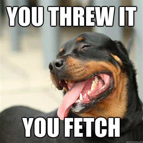 The Dog Meme - funny dog memes 15 pics