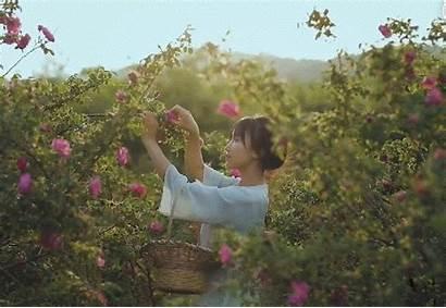 Liziqi Peaceful Garden Asian 收藏 Uploaded