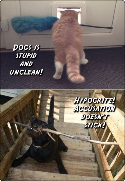 Dog And Cat Memes - dogs anonamos3021