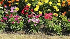 Quoi Planter En Automne : comment planter des fleurs dans son jardin blog jardin ~ Melissatoandfro.com Idées de Décoration