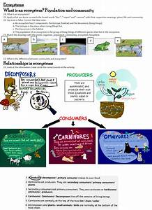Light And Energy Games Natural Science 5 Grade 4 Living Things Ecosystems