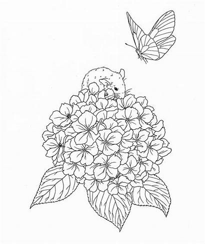 Coloring Adult Nature Pages Harmony Books Pg