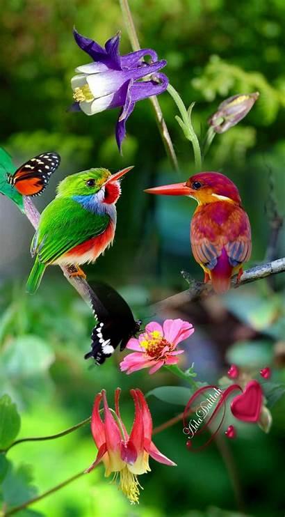 Birds Animals Funny Pretty Nature Bird Exotic