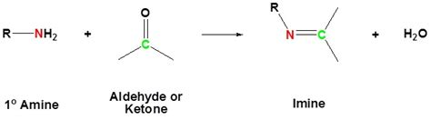 Reaction with Primary Amines to form Imines - Chemistry