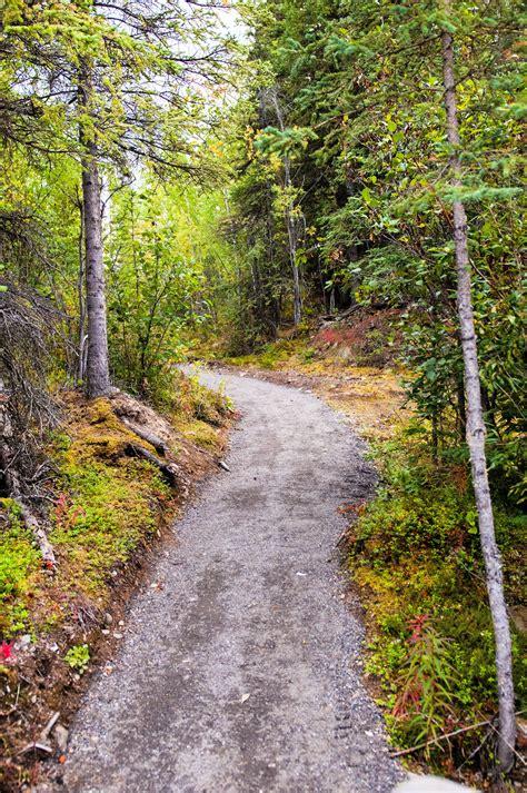 gambar wallpaper jalan hutan joen wallpaper