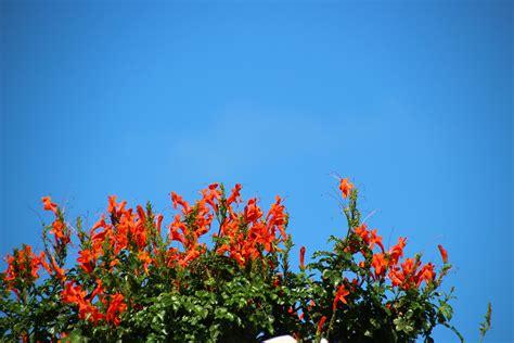 Hängeliegen Für Garten by Blauer Himmel Blumen Gr 252 N Rot Schwebeliegen