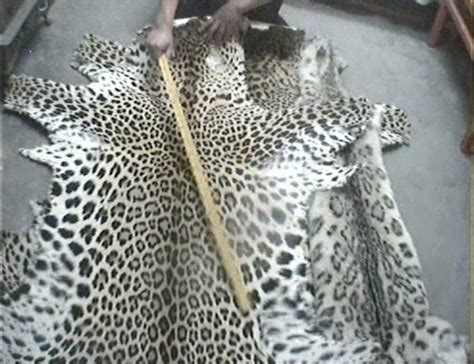 cites parties    forgotten big cats  mind