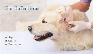 ear infections in pet symptoms causes and treatments of pet ear infections