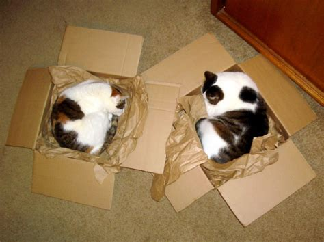 how to de stress you cat how do you de stress a cat use a box silly with cats