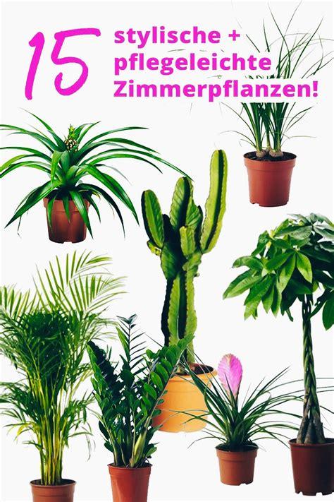 Zimmerpflanzen Wenig Wasser by Der Pflanzen Guide 15 Stylische Und Pflegeleichte