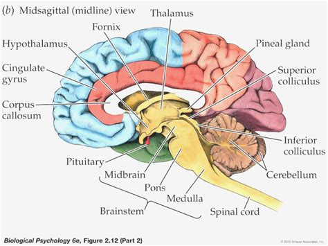 Label Brain Diagram by 15 Lessons I Ve Learned From Label Maker Ideas Information