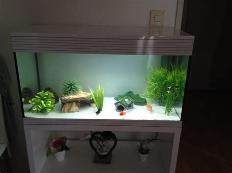 lancement aquarium 100l askoll kit xl