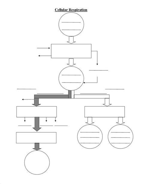 13 best images of cellular respiration diagram worksheet