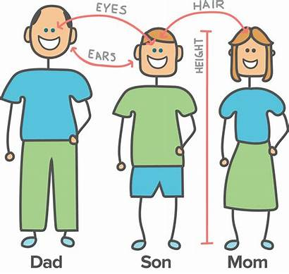Heredity Examples Clipart Environment Frantic Biology Genetic