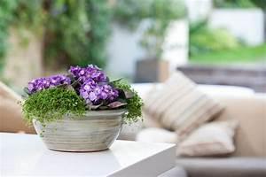 The, 12, Best, Flowering, Houseplants