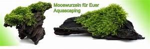 Pflanzen Auf Stein : gesunde aquarienpflanzen direkt aus der g rtnerei bestellen ~ Frokenaadalensverden.com Haus und Dekorationen
