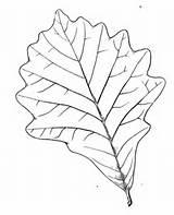 Coloring Tree Leaves Birch Oak Leaf Printable Bark Canoe Template Supercoloring Sketch Categories sketch template