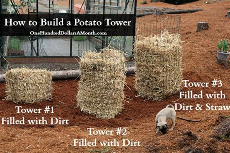 diy potato diy potato tower update one hundred dollars a month
