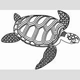 Hawaiian Sea Turtle Clipart   830 x 615 png 123kB