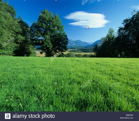 Backgrounds Outside by Germany Murnauer Moss Nature Plants Trees Meadow Field