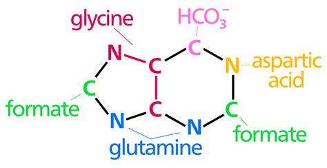 Nucleotide Synthesis.svg